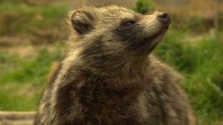 حیوانات کمیاب، سرگردان در بریتانیا
