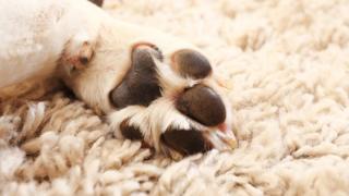 Puppy paw, stock image