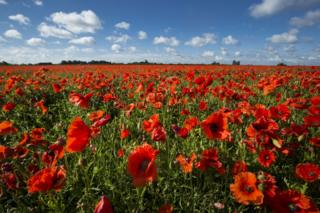 what is remembrance day - photo #34
