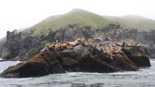 阿留申海岸也是大量海鳥築巢繁衍之地,海鳥數量之大,比美國其他地區的總和還要多。鳥類愛好者們從世界各地遠道而來,觀看各種各樣的水禽,尤其是極為罕見的須海雀(whiskered auklet)。