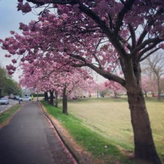 Anele McGonigle from Paisley said the wonderful cherry blossom trees always brighten her day