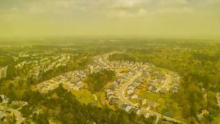 Pollen cloud in Carolina