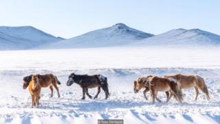 mongolia, -40, danau khovsgol, festival