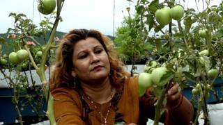 सरिता कटुवाल