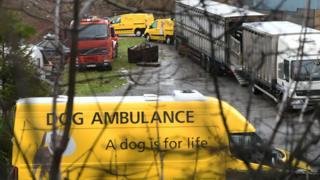 Dogs Trust vans at the site near Pembroke Dock