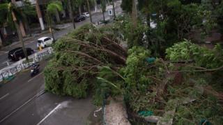 澳門街上樹木被連根拔起(中新社圖片23/8/2017)