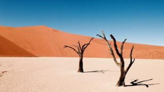 Árboles en el desierto.