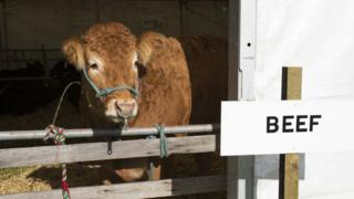 "Cow at agricultural show with sign that reads ""beef"""