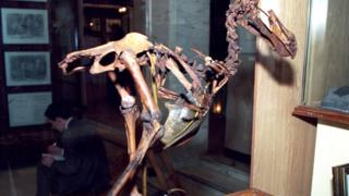 скелет Додо в Дарвинском музее
