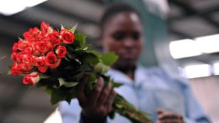A Kenyan flower worker holding a bunch of roses