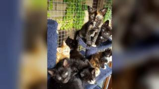 Kittens at Cats Protection in Peterborough