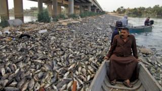 آلاف الأسماك النافقة تتكدس على ضفاف نهر الفرات قرب سدة الهندية