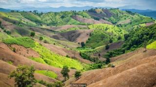 Bahkan lahan yang telah dibersihkan dapat kembali menjadi hutam rimbun dengan pertolongan yang tepat