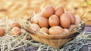 yumurta, yumurta istehsalı, xarici yem, monopoliya, inhisarçılıq