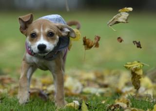 Jessie terlihat berlarian diantara daun-daun yang gugur di Glasgow