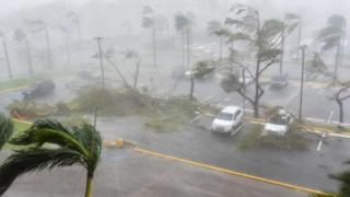 Trees toppled over in a parking lot at Roberto Clemente Coliseum in San Juan, Puerto Rico, 20 September 2017