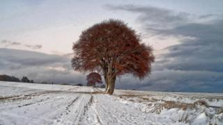 Trees and snow near Munlochy