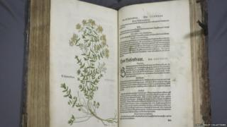 A book by Leonhart Fuchs on herbal plants published in Basel in 1542