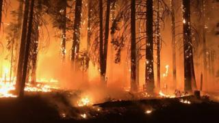 Burning trees in California