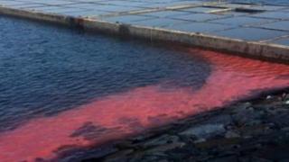 khu vực D cầu cảng dịch vụ cảng Sơn Dương (thuộc Công ty Công ty Formosa Hà Tĩnh) xuất hiện một dải nước màu đỏ dài khoảng 50m tấp vào chân bờ kè cảng