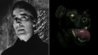 Christopher Lee as Dracula and a black dog