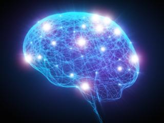 สมองส่วนฮิปโปแคมปัสยังคงผลิตเซลล์ประสาทขึ้นมาใหม่ แม้คนเราจะเติบโตเป็นผู้ใหญ่หรือเข้าสู่วัยชราแล้วก็ตาม