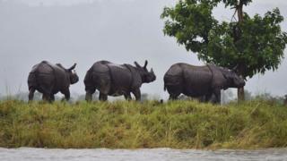 african parks, zakouma, rhinocéros noirs