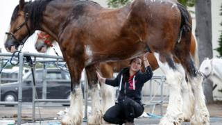 """Michelle Mayberry washes """"Poacher"""", a Clydesdale from Campbeltown"""