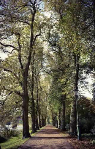 The tree-lined avenue that runs alongside the River Ribble