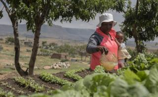 A picture made available on 03 Nobvember 2016 shows Matabello Fokotsane (64) holding her grandchild Reatile (1) as she waters her Keyhole Garden in a village in the Makhoarane District, Masero, Lesotho, on 02 November 2016