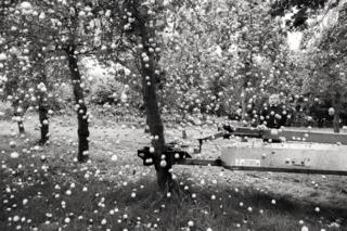 A machine shakes an apple tree with apples falling to the ground