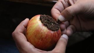 Karanfilli elma