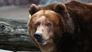 Bear in Moscow Zoo