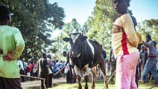 People look on at a bull in western Kenya