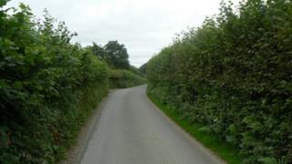 Hedges near Llwynderw, Powys