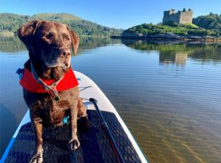 Kirsty Milne sent this photo of her chocolate lab Ceilidh enjoying an early morning paddle at Castle Tioram.