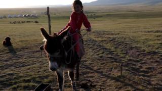 Кыргызстан эшекти экспорттоо боюнча 2008-жылы Кытай менен расмий келишим түзгөн.