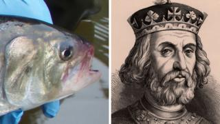A shad, and a portrait of King Henry III