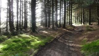 Forest trail at Radnor Forest