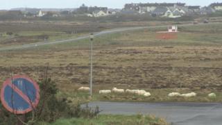 Caoraich aig Port-Adhair Steòrnabhaigh