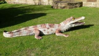 The crocodile was chained up in a private garden near the River Aire for many years