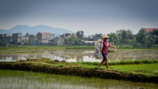 Вьетнамская ферма