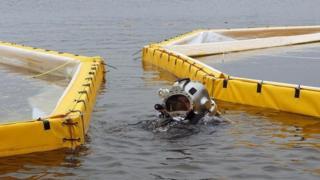 潜水员在水下放置沙袋以加固北湖实验湖区的围栏 (Credit: Lesley Evans Ogden)
