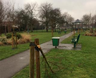 Trees in Dovecote Lane Recreation Ground