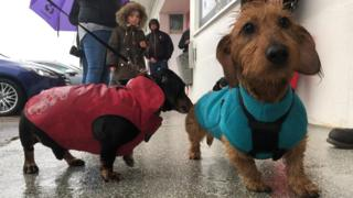 Two dachshunds.