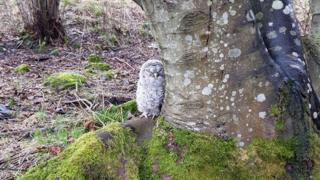 Owl at foot of tree