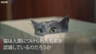 猫は実は自分の名前を聞き分けている=日本研究