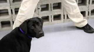 ซีไอเอ ทวีตความคืบหน้าเกี่ยวกับประสบการณ์ฝึกสุนัขตำรวจของลูลู