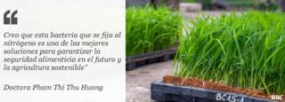 Cita de la doctora Huong con imagen de plantas de semillero de arroz