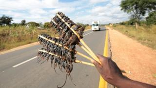 A man sells roast mice to passing motorists near Salima, Malawi 15 May 2017. Mice is a delicacy for many Malawians and is popular as a source of income for many unemployed men in rural Malawi.